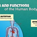 6 bilingual infographics about the human body