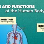6 infografías bilingües sobre el cuerpo humano